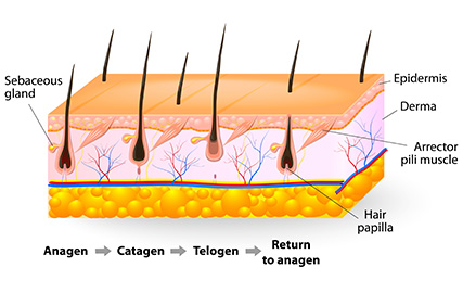 hair loss in men 1 mfine