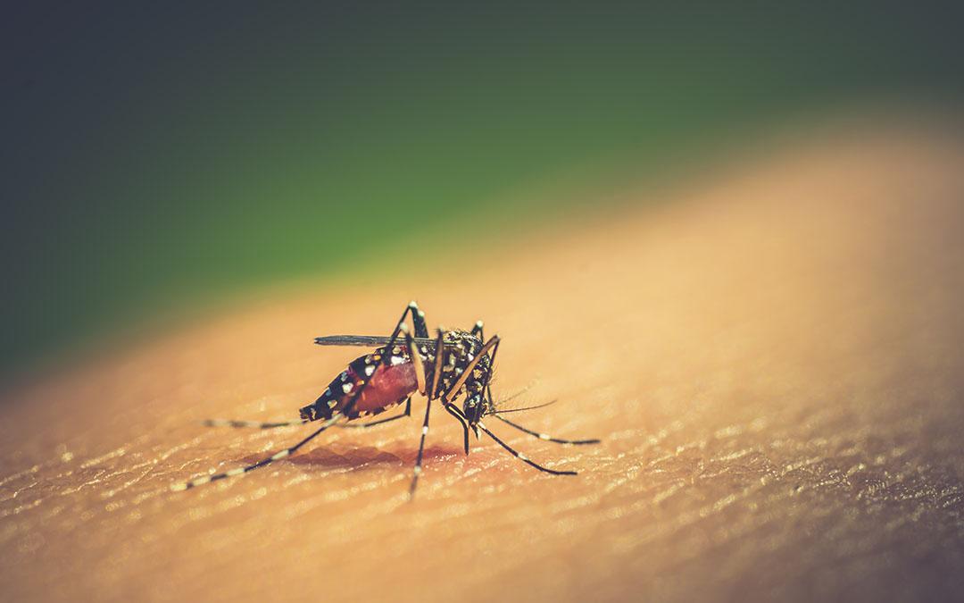 A Look at Dengue Fever