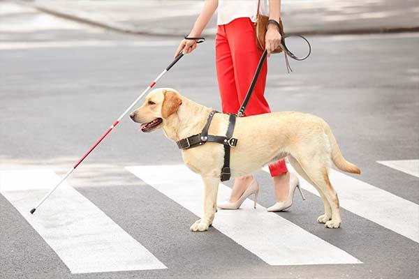 health benefits of pets disabilities mfine
