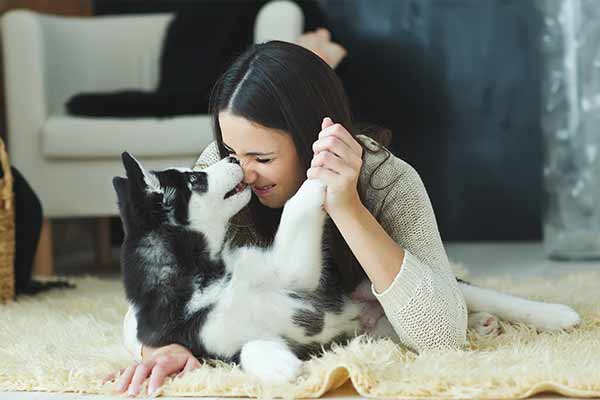 pet therapy mfine