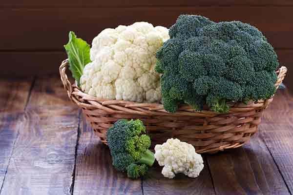 fibre foods mfine