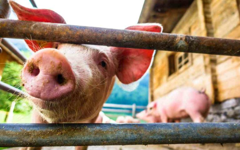 Zoonotic Diseases: 5 Diseases That Are Transmitted Via Animals